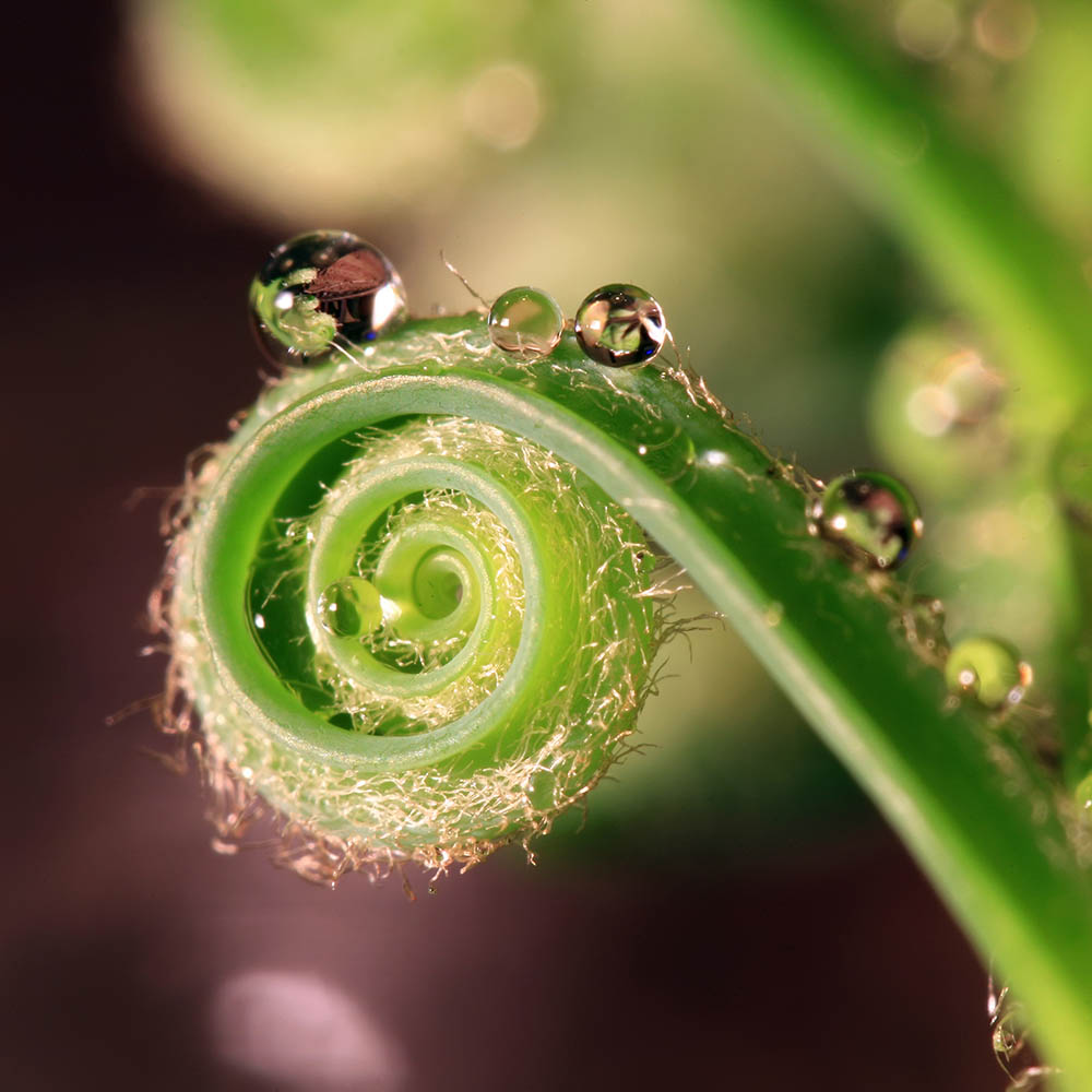 Pflanze in Spiralform stellvertretend für Systemische Einzeltherapie
