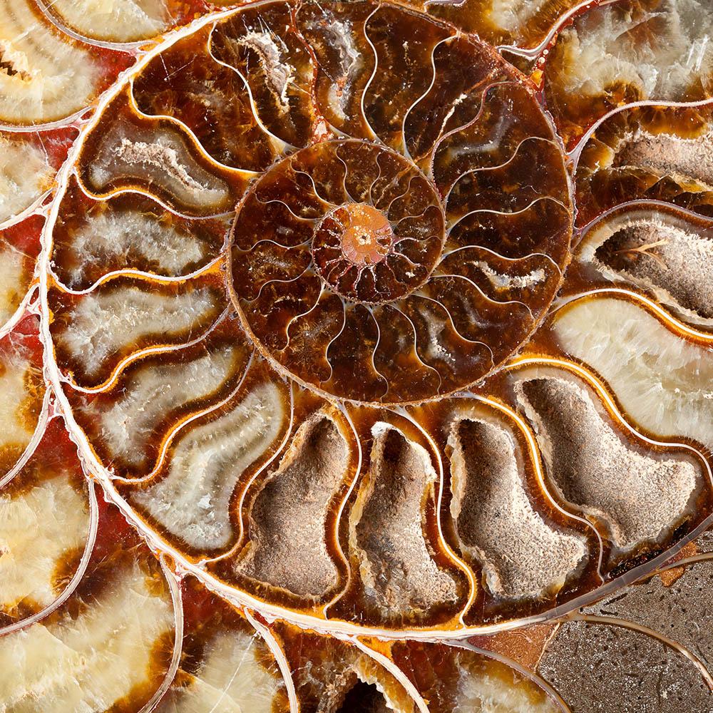 Spirale einer Muschel als Sinnbild für die Stationen des Lebens / Qualifikationen